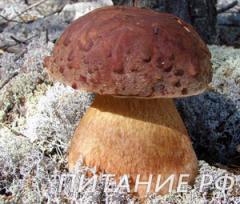 сказки про гриб
